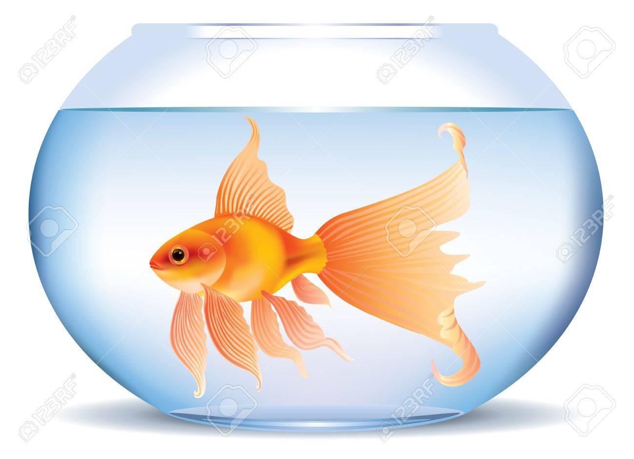 Illustration of goldfish in aquarium Stock Vector - 14175792
