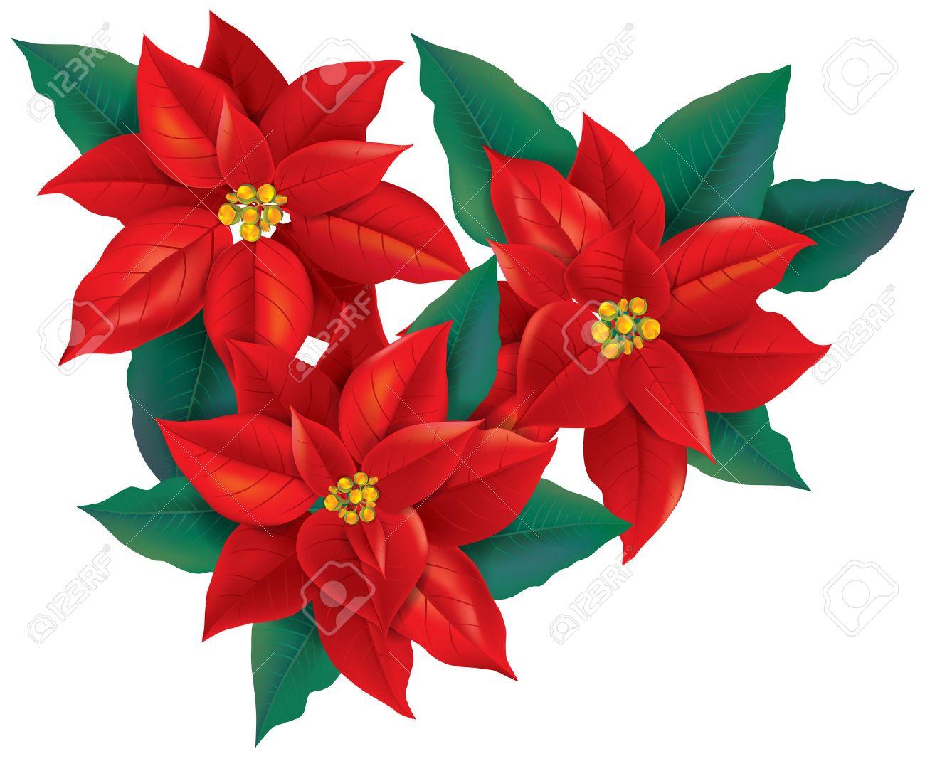 Roter Weihnachtsstern Blume. Transparente Objekte Enthält. EPS10 ...