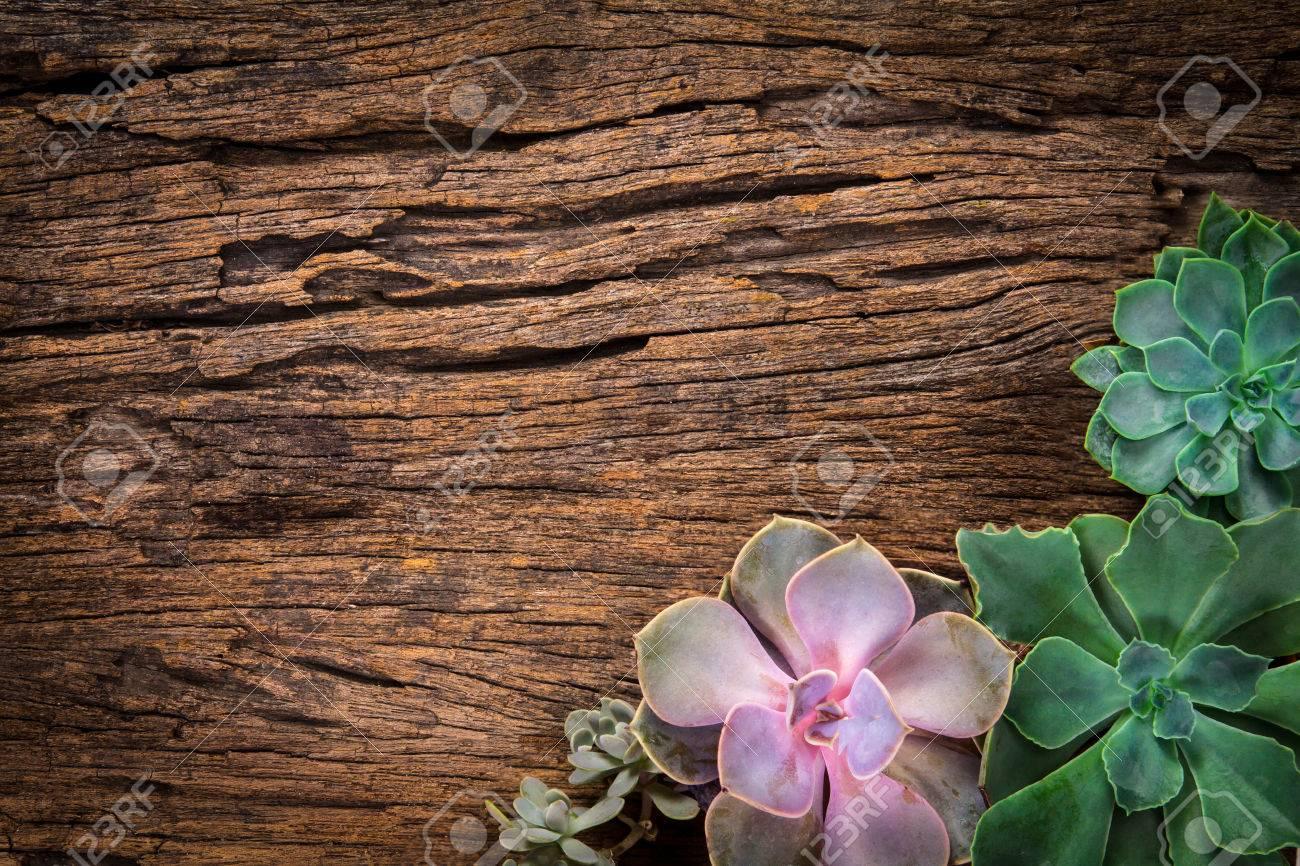 Disposición De Las Plantas Suculentas O Cactus En El Fondo De Madera ...