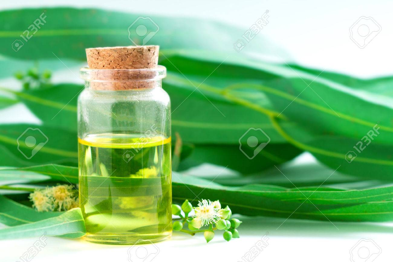 Eucalyptus Essential Oils In Glass Bottle Oganic Herbal Aromatherapy Concept Stock Photo