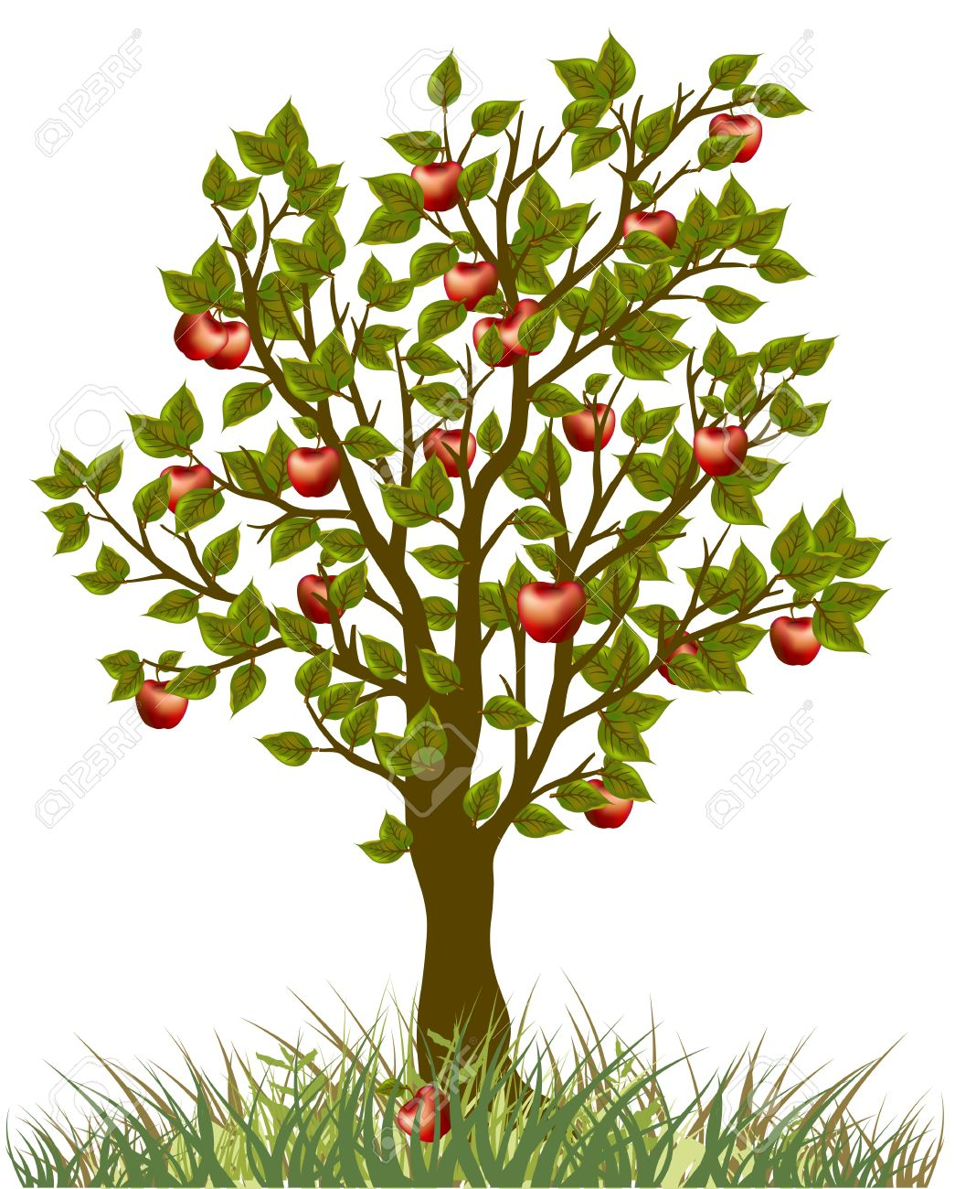 apple tree illustration. apple tree stock vector - 12494396 illustration