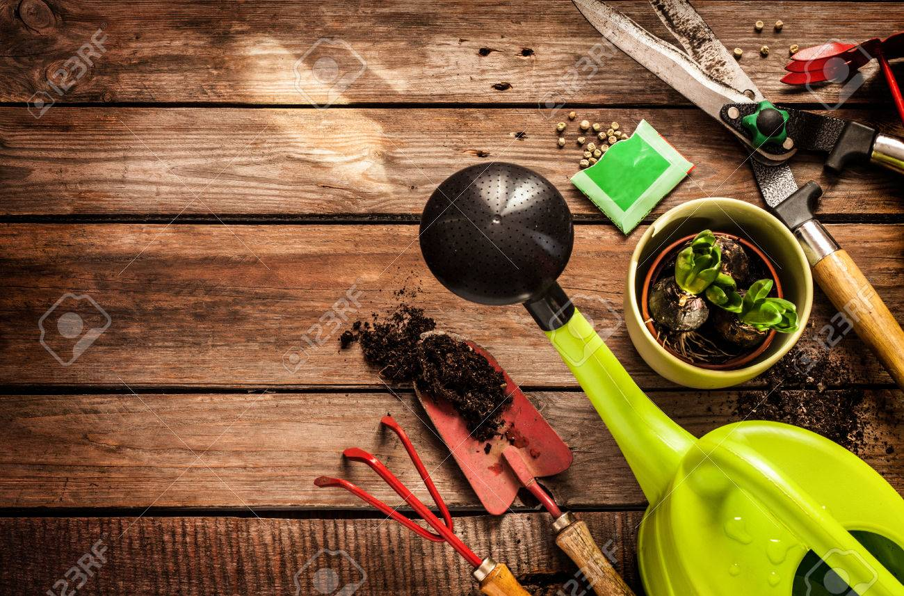 Gardening tools, watering can, seeds, plants and soil on vintage wooden table. Spring in the garden concept background with free text space. - 55317395