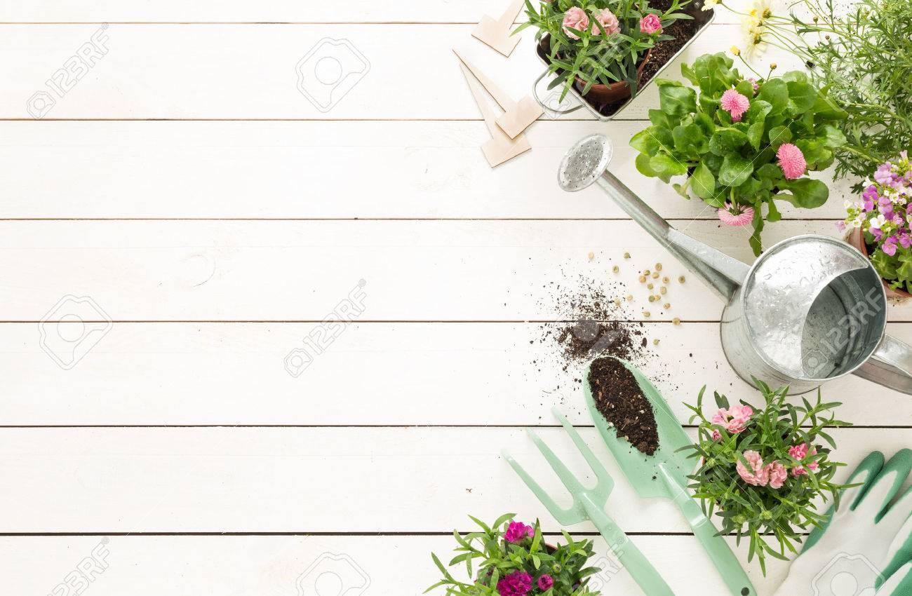 Giardinaggio Fiori.Immagini Stock Attrezzi Da Giardinaggio Fiori In Vaso E Di