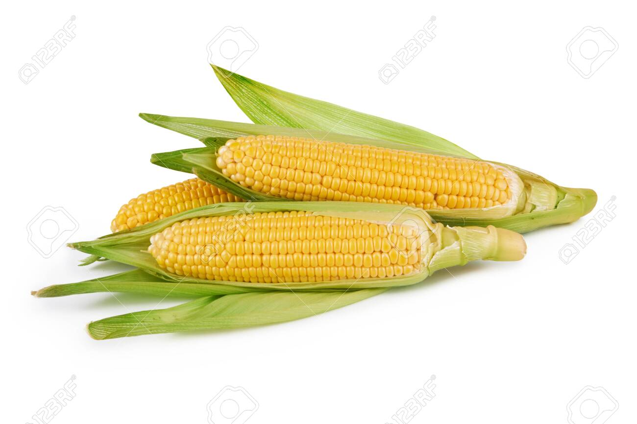 fresh corn vegetable with green leaves on white - 138909530