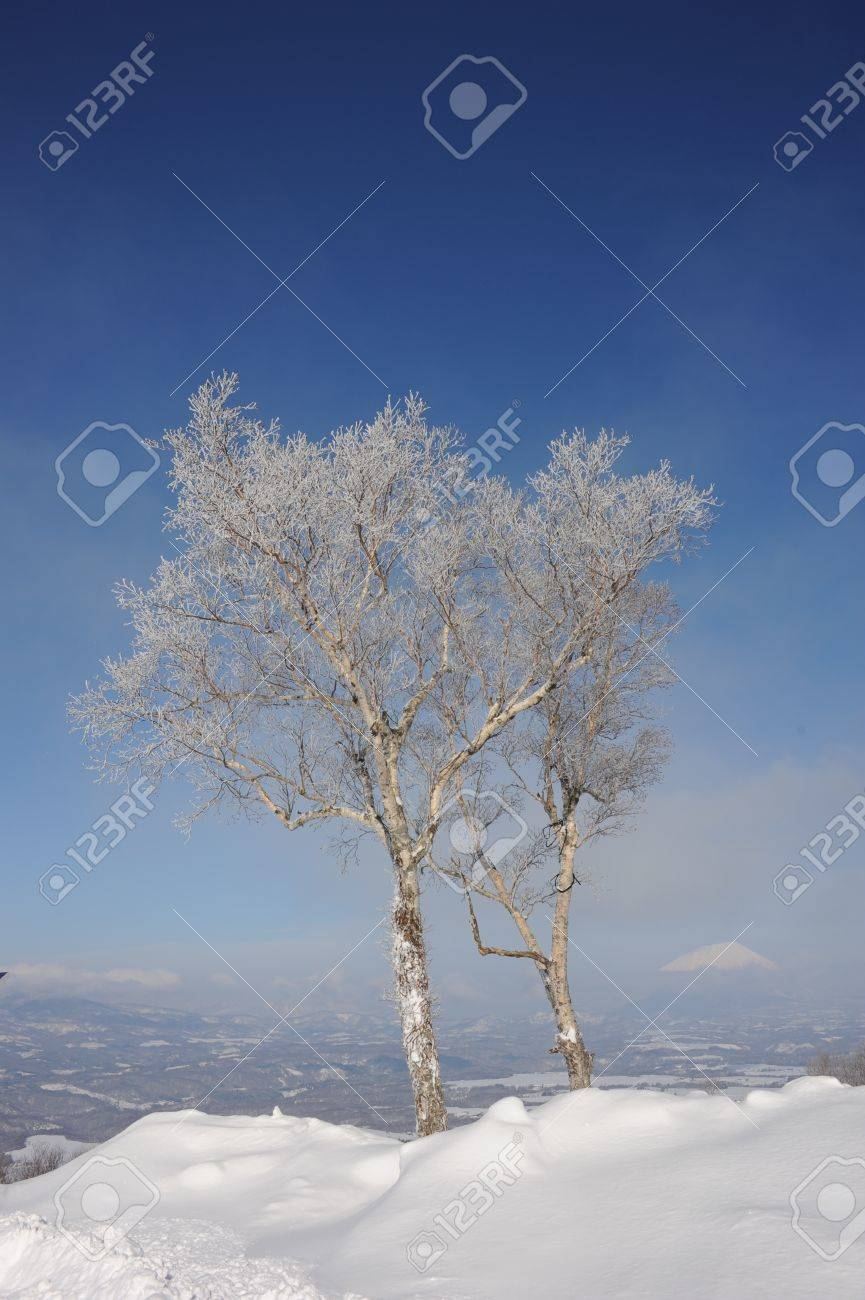 White winter landscape with a snow-clad tree in Hokkaido, Japan Stock Photo - 11916812
