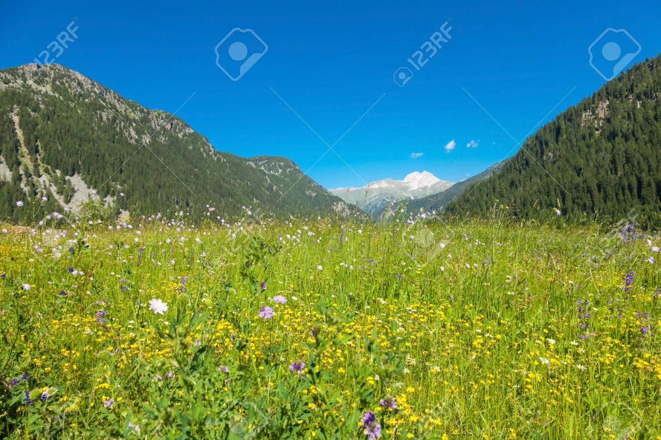 Risultato immagini per montagna con prato fiorito