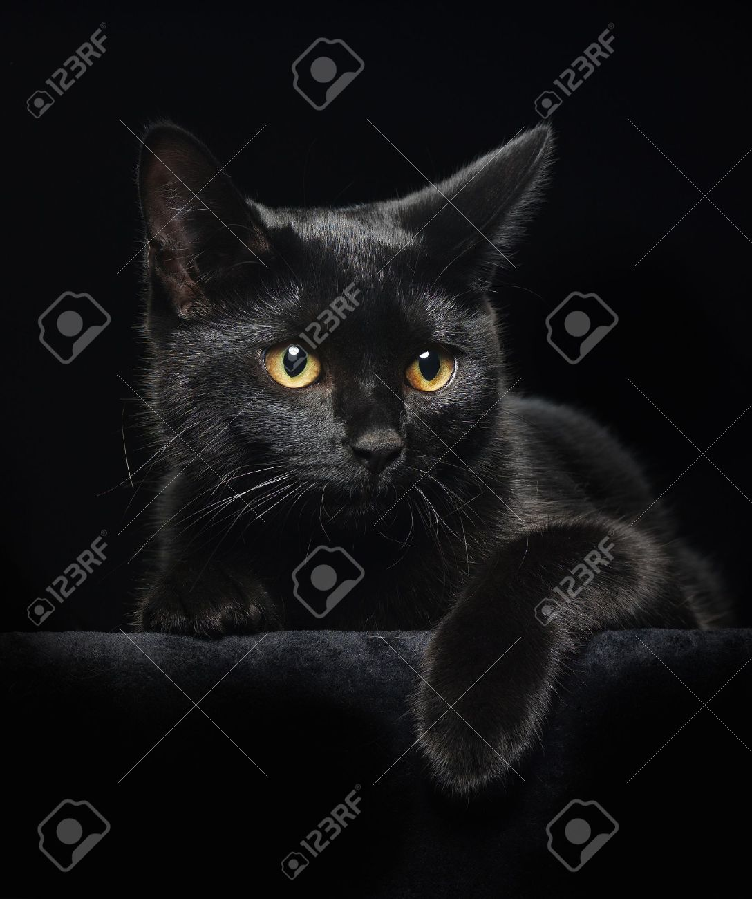 Black Cat With Yellow Eyes On Black Background Stock Photo Picture And Royalty Free Image Image 14282533