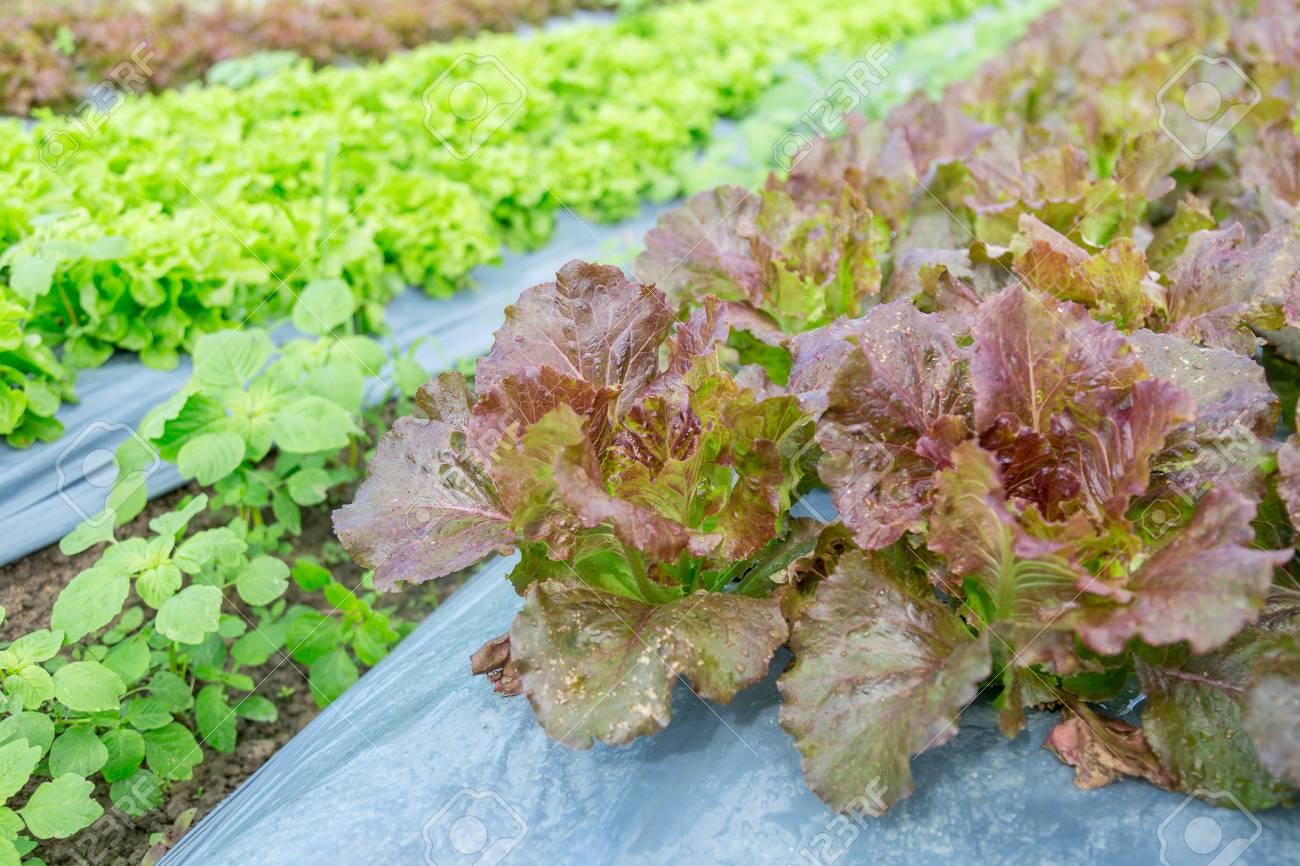 Organic vegetable farm - 92361813