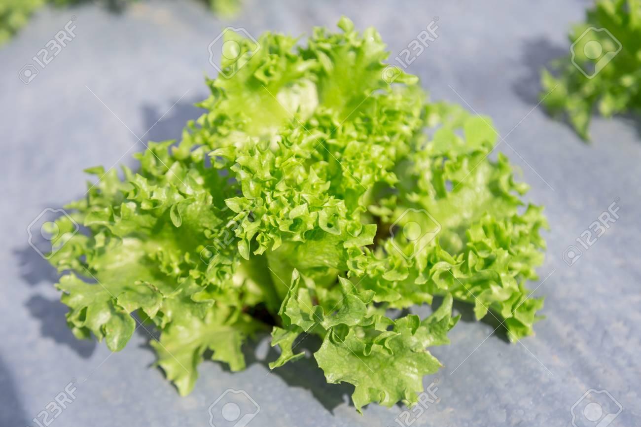 Organic vegetable farm - 92512185