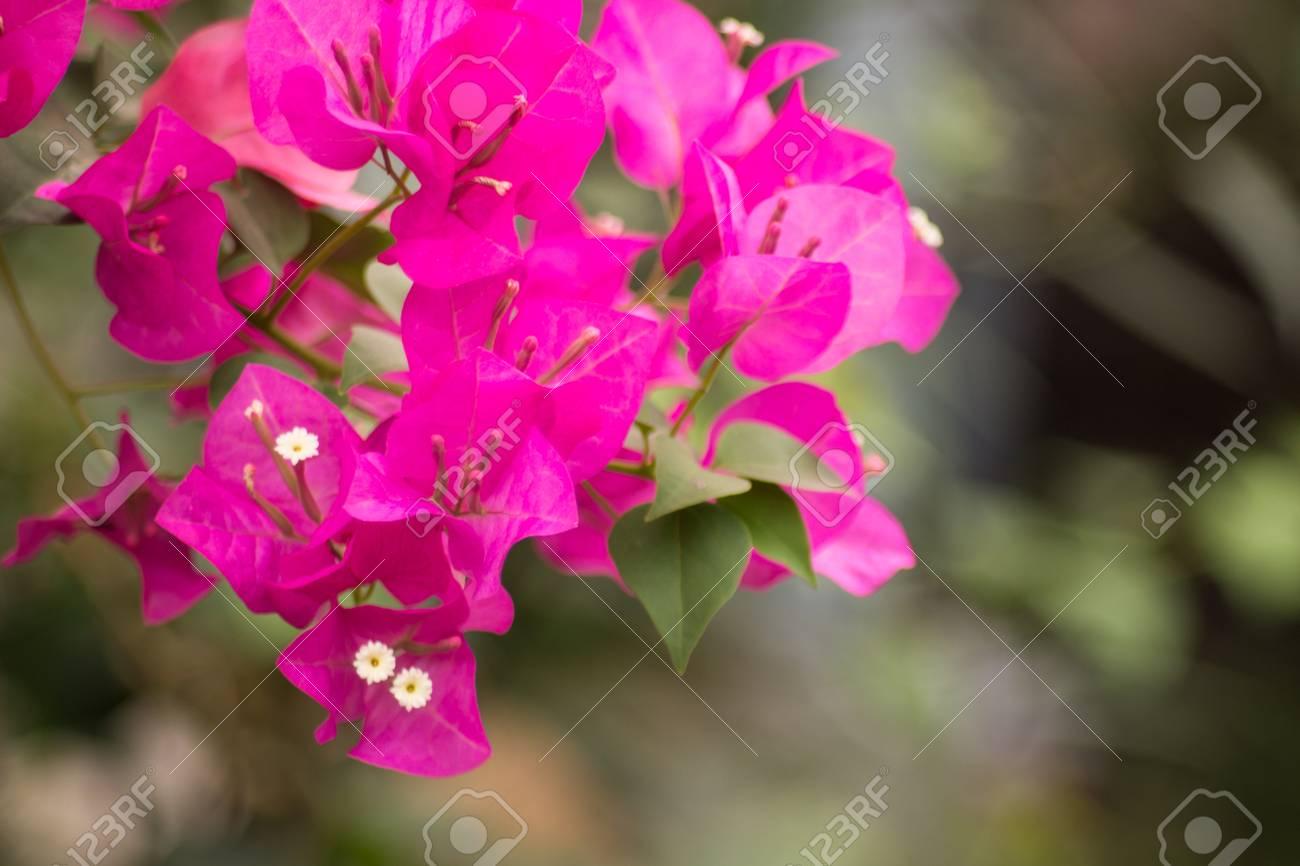 Paper flower in garden at thailand stock photo picture and royalty paper flower in garden at thailand stock photo 27416363 mightylinksfo