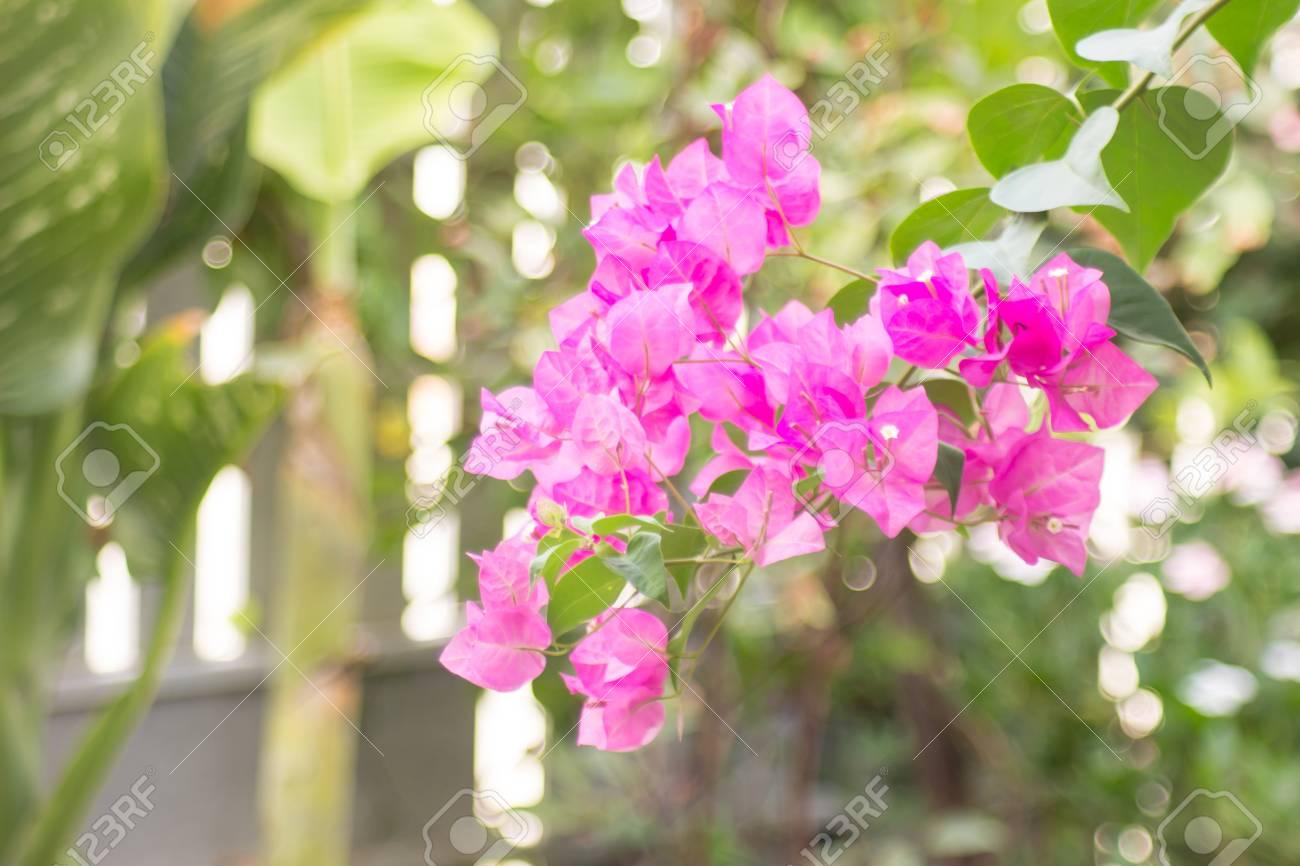 Paper Flower In Garden At Thailand