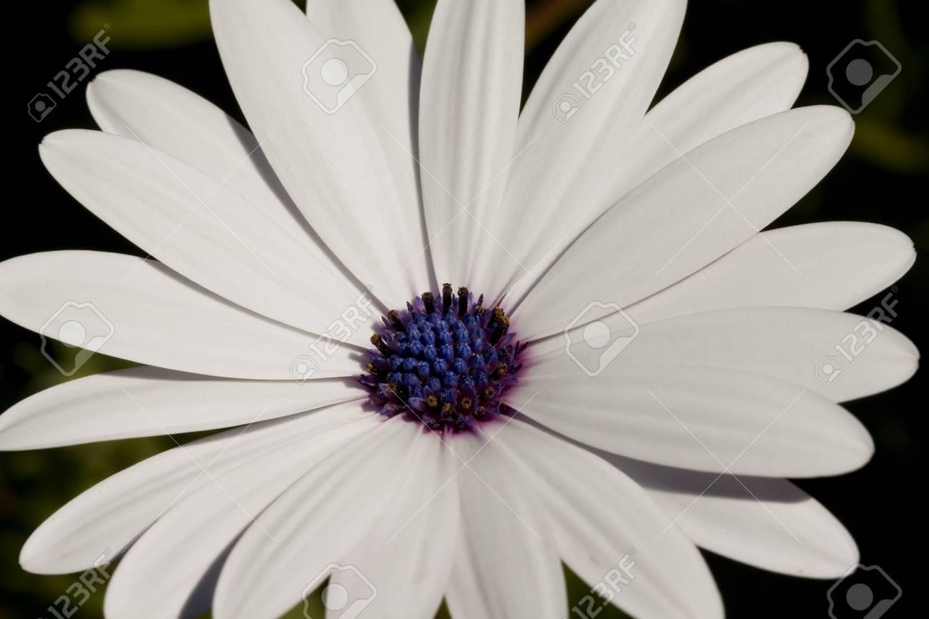 Une Fleur Blanche A La Fin De L Hiver Dimanche Banque D Images Et