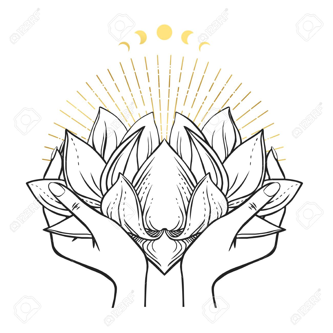 Female Hands Holding Lush Lotus Flower Vector Hand Drawn