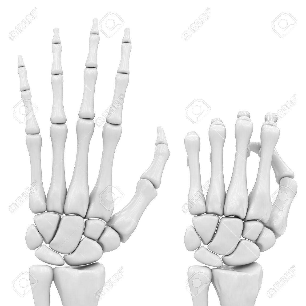 skeletal hand Stock Photo - 8582571
