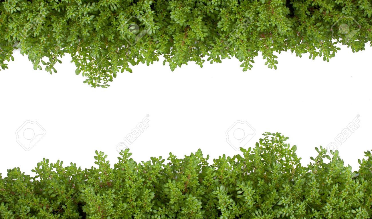 isolated fern green as on white background. Stock Photo - 10452561