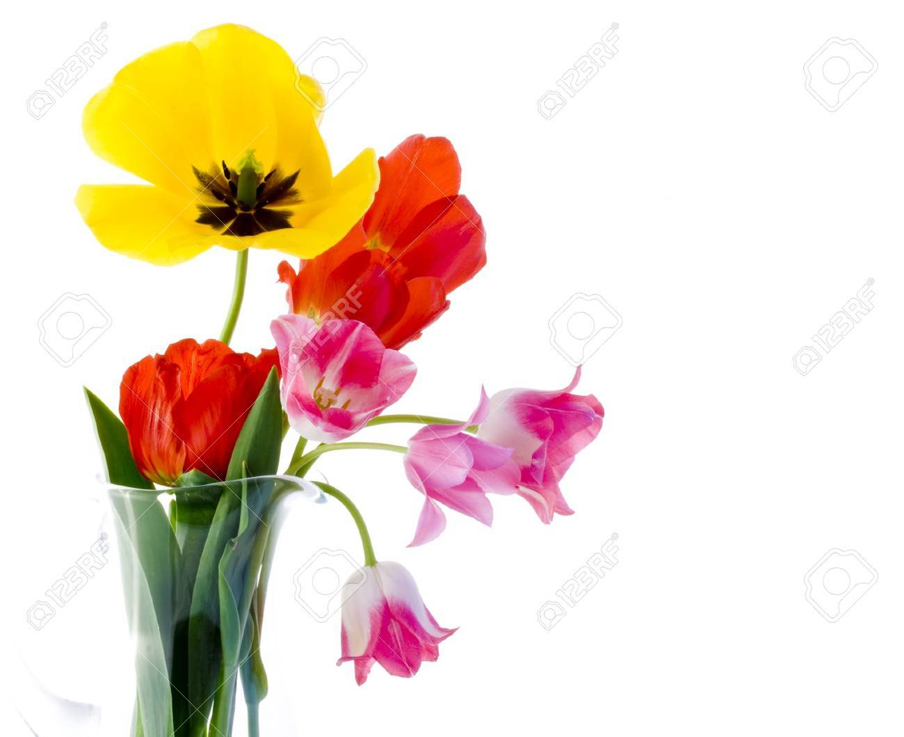 Tulips Stock Photo - 4244506