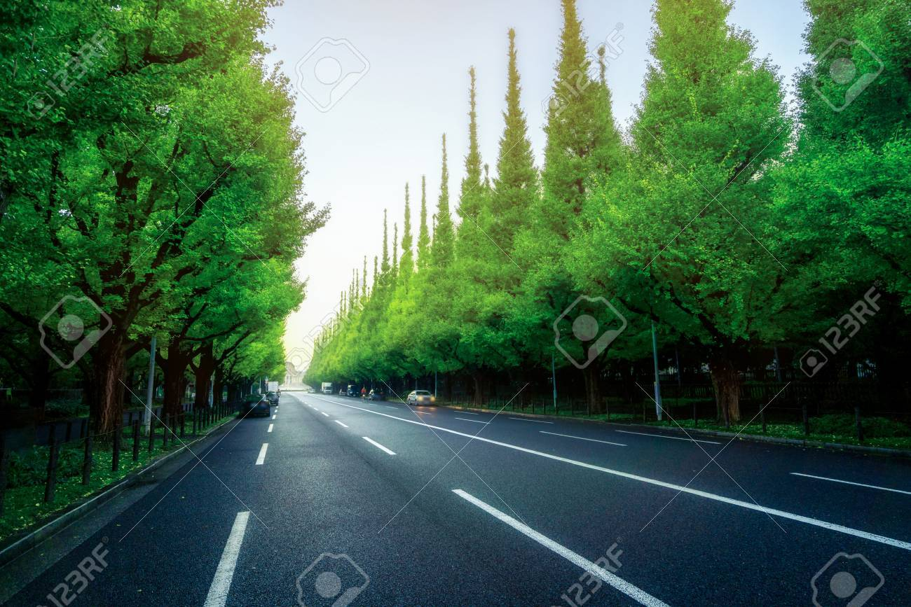Beautiful Road With Trees On Sideroad In Summer. Straight Road ... for Straight Road With Trees  143gtk