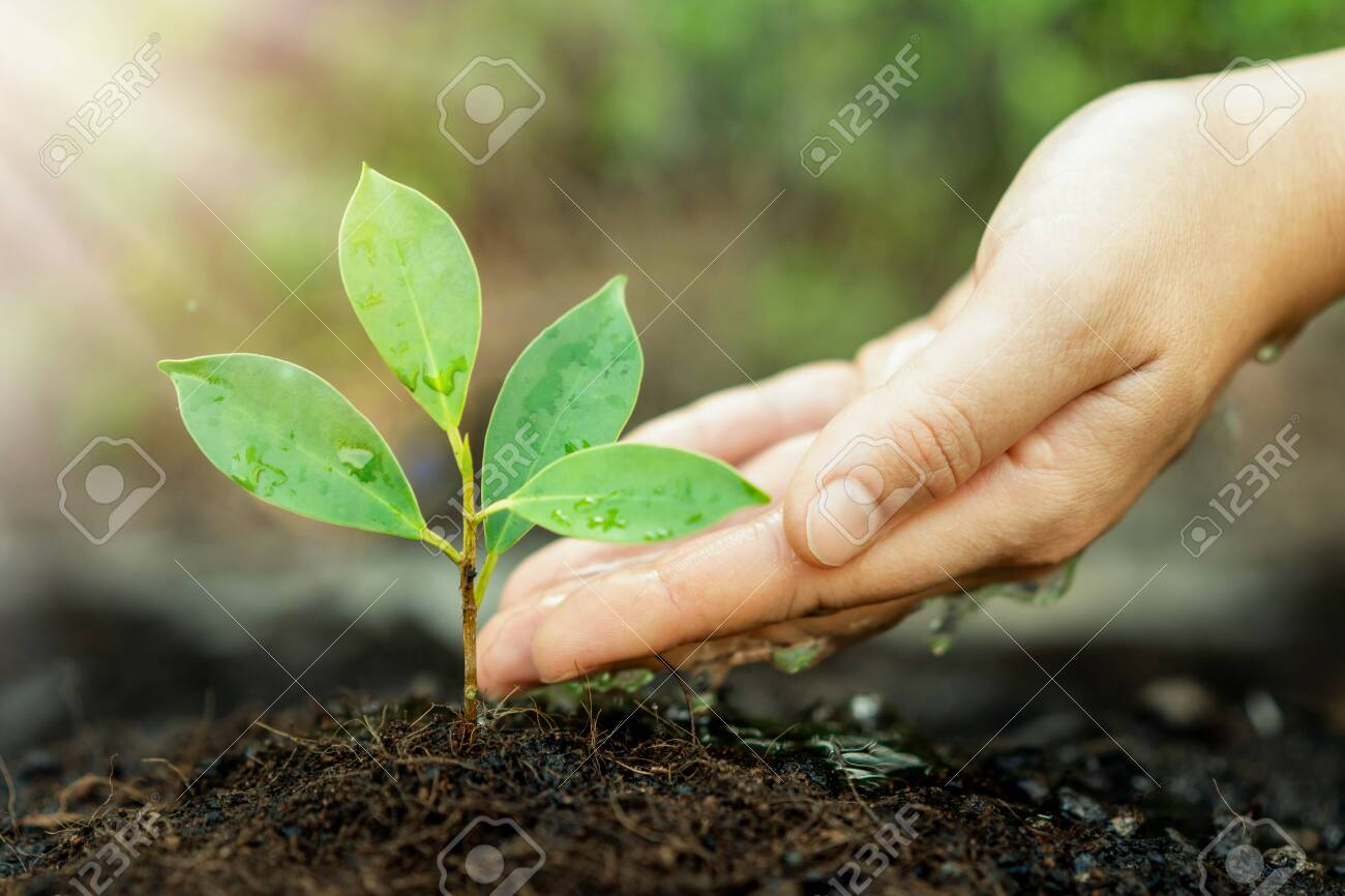 New life of young plant seedling grow in black soil. Gardening and environmental saving concept. - 126587750