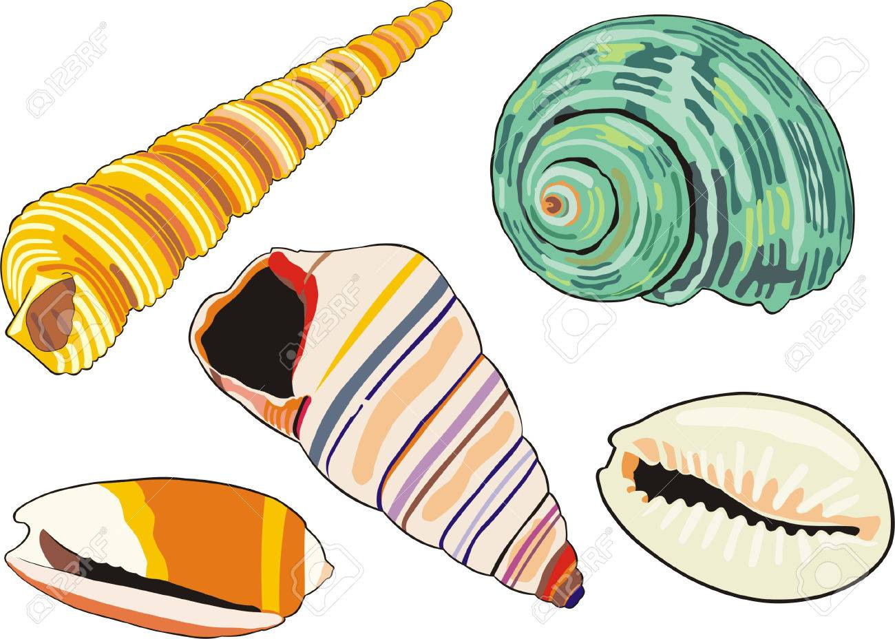 art illustration of isolated different sea-shells Stock Vector - 6023497