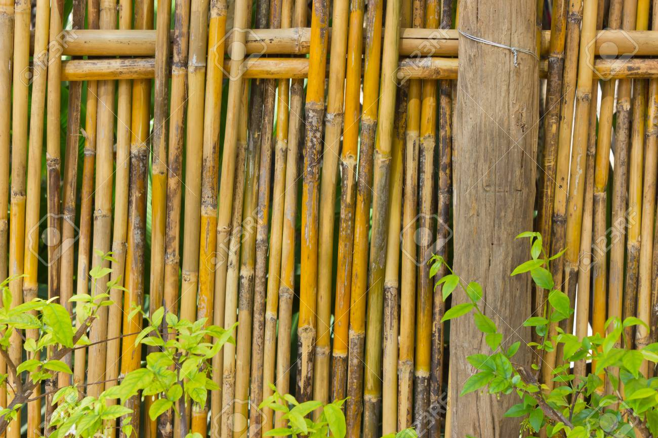 Bamboo Fence For Demarcation And Decorations. Stock Photo, Picture ...