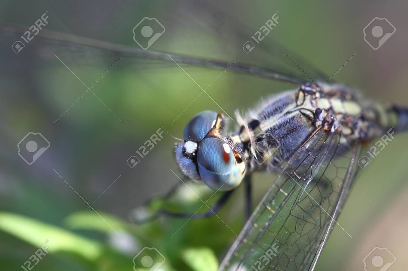 Dragonfly in nature Stock Photo - 20315411