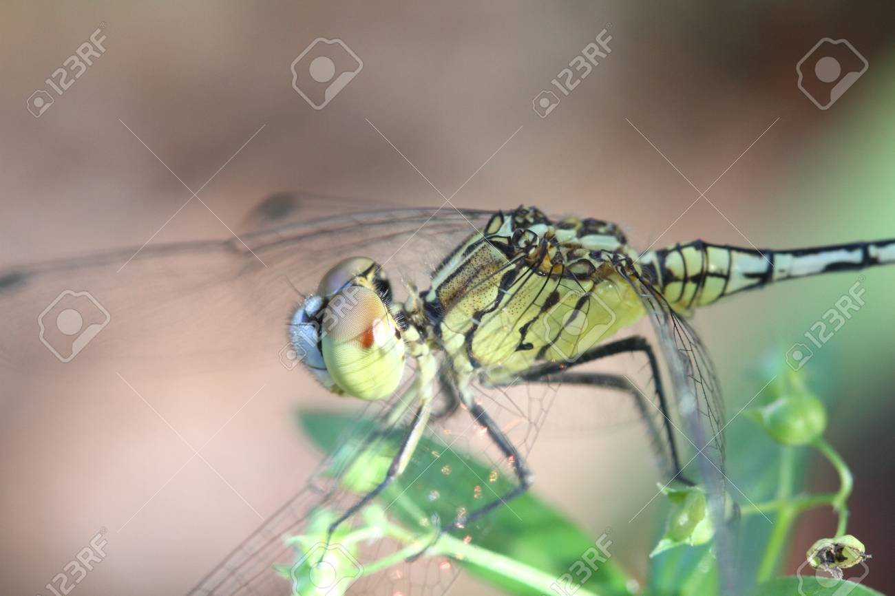 Dragonfly in nature Stock Photo - 20315412