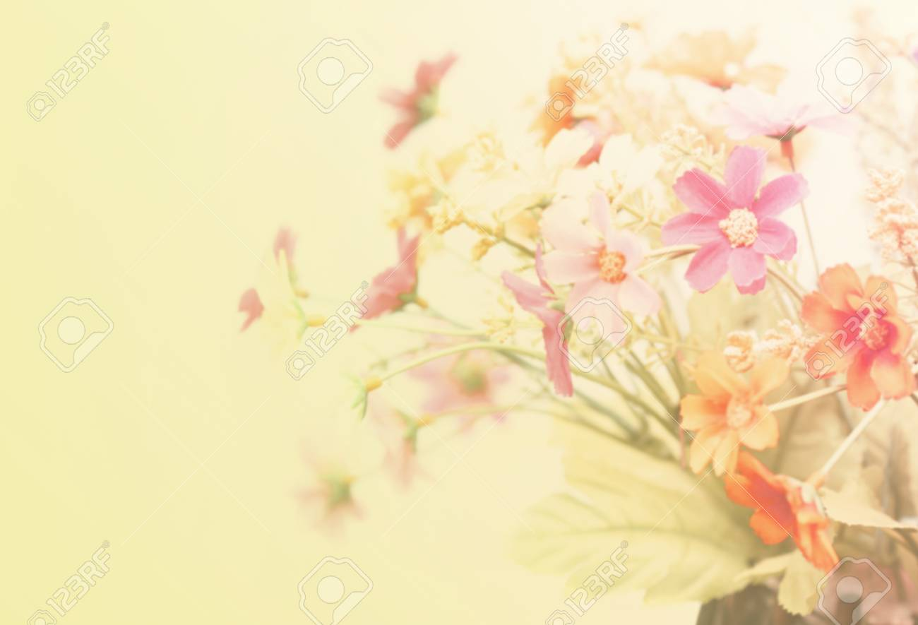 Pretty Flowers Blooming In Soft And Blur Style For Background Stock