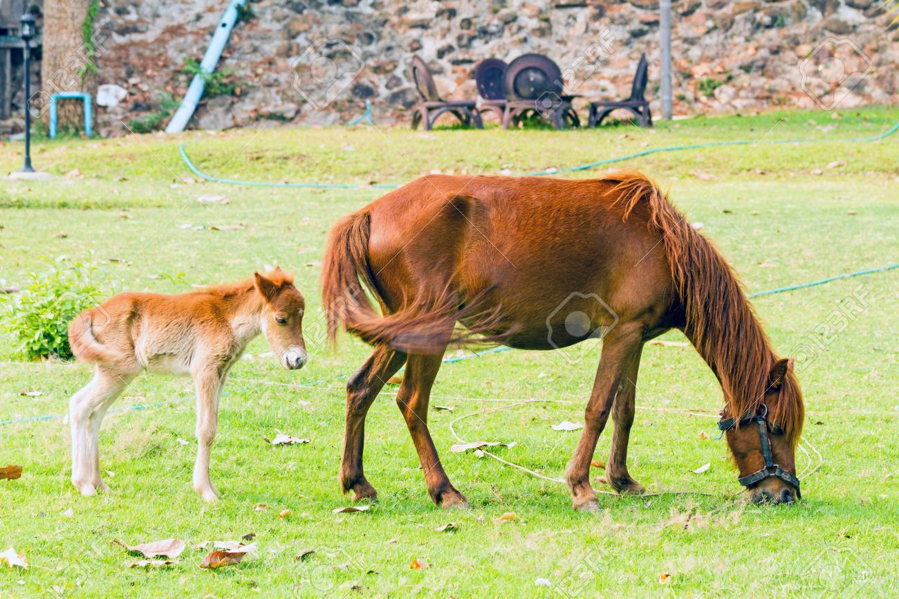 Baby Horse With Mother In Green Grass Stock Photo Picture And Royalty Free Image Image 51949772