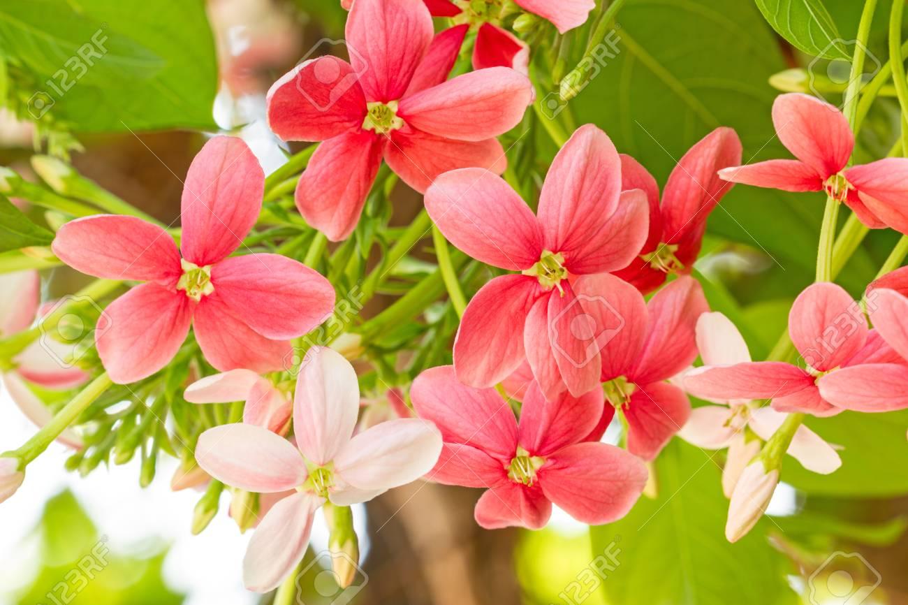 Image result for madreselvas en flor