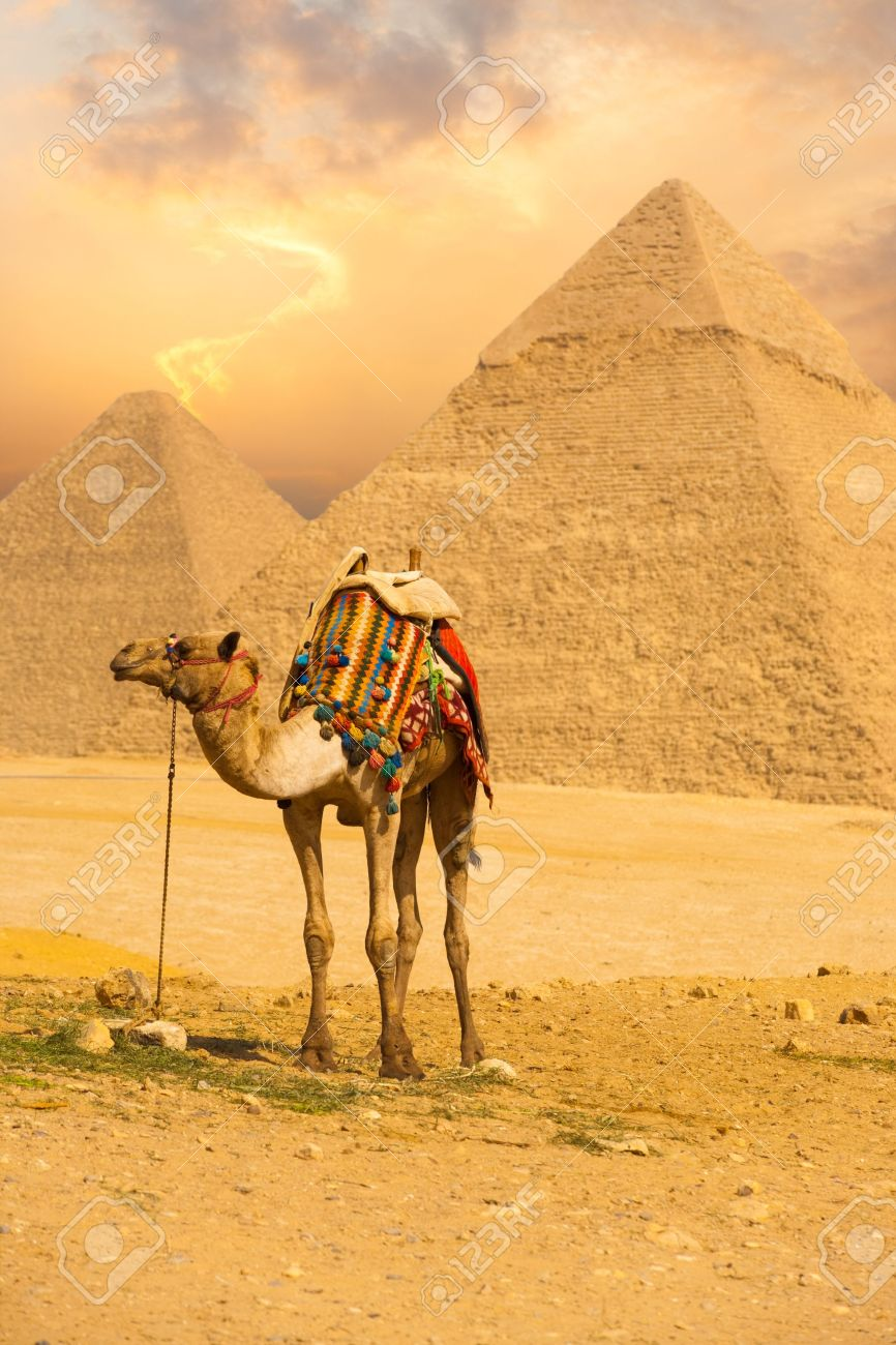 A patient camel with a colorful saddle waits for its owner in front of the pyramids of Giza in Cairo, Egypt. Vertical - 13699763