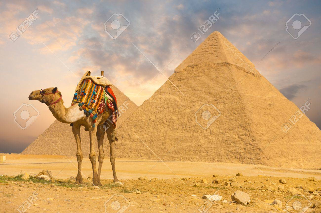 A colorfully saddled camel waits for its owner in front of the pyramids with a beautiful sky of Giza in Cairo, Egypt. Horizontal - 13699748