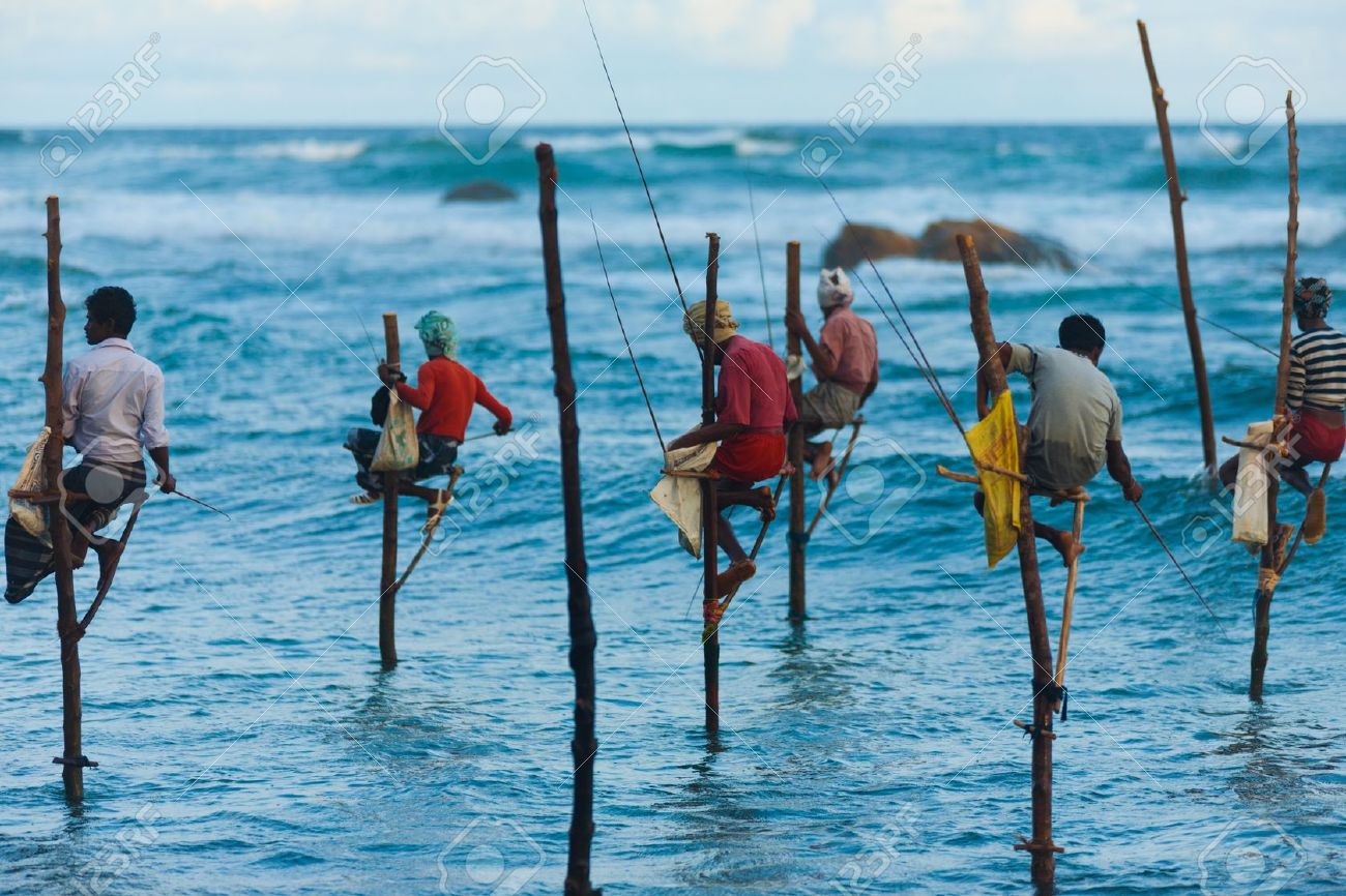 UNAWATUNA, SRI LANKA - MAY 22, 2008: Unidentified Sri Lankan stilt fishermen catch small fish in this unique traditional method sitting above the water on May 22, 2008 in Unawatuna, Sri Lanka - 16205537