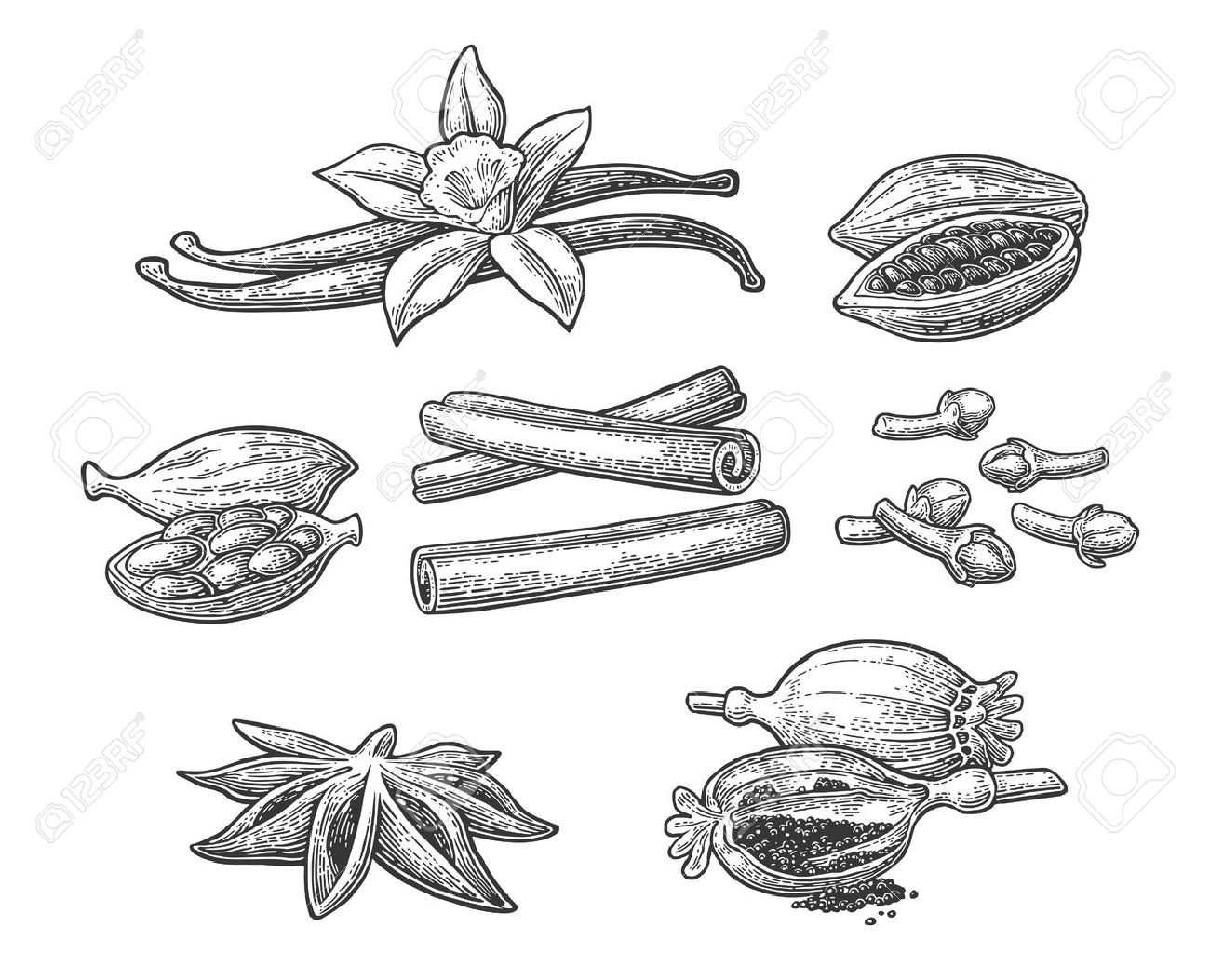 Set of spices. Anise star, cardamom, clove, cinnamon stick, fruits of cocoa beans, vanilla stick and flower, poppy heads and seeds. Isolated on white background. Vector black vintage engraving illustration. - 68479793