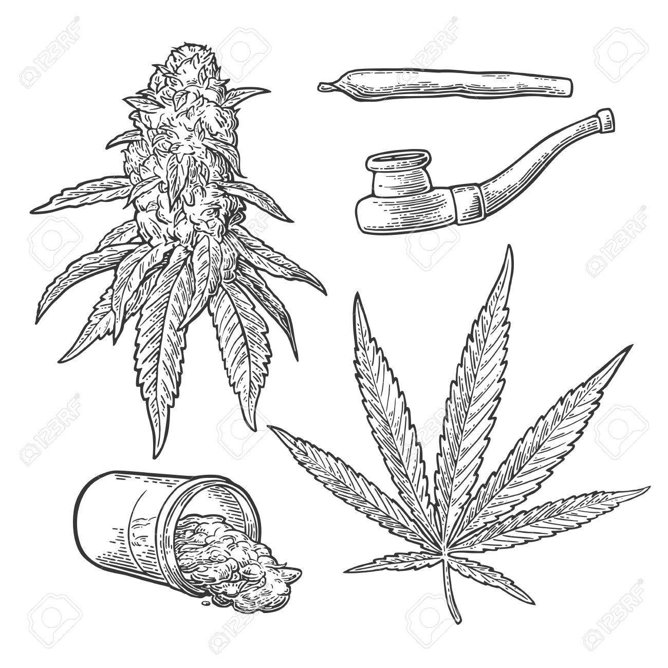 Marijuana buds, leaves, jar, cigarettes and pipe for smoking. Hand drawn design element. Vintage black vector engraving illustration for label, poster, web. Isolated on white background - 69093739