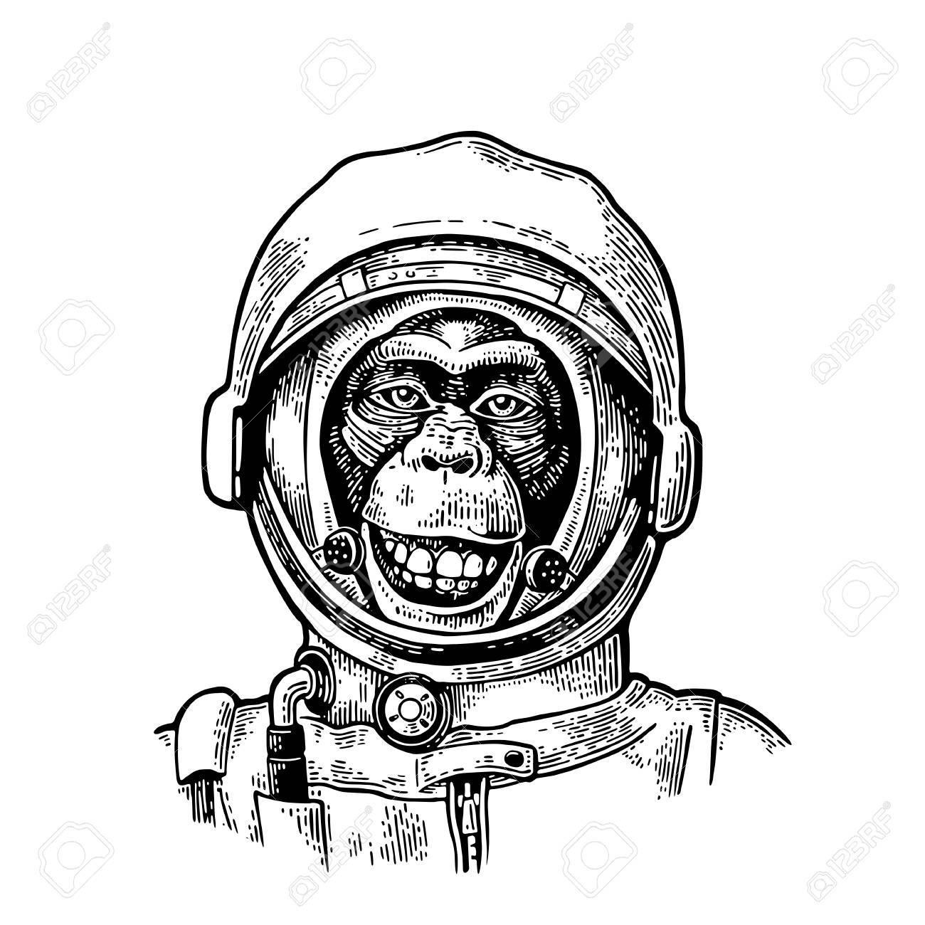 Monkey In Astronaut Helmet Vintage Black Engraving Stock Vector