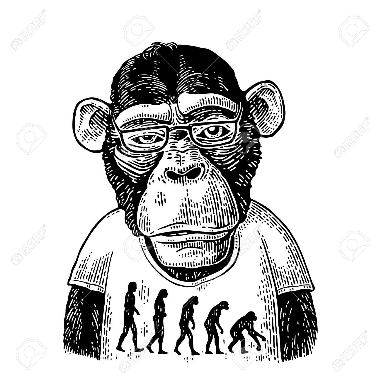 Monkeys in a T-shirt with the theory of evolution on the contrary. - 77406023