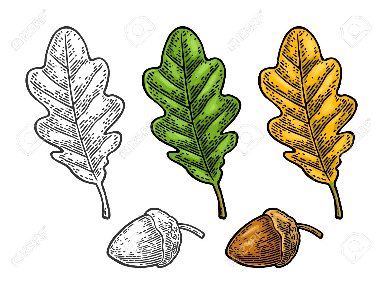coloring pictures acorns | Only Coloring Pages | Coloring pages, Free  coloring pictures, Free coloring pages