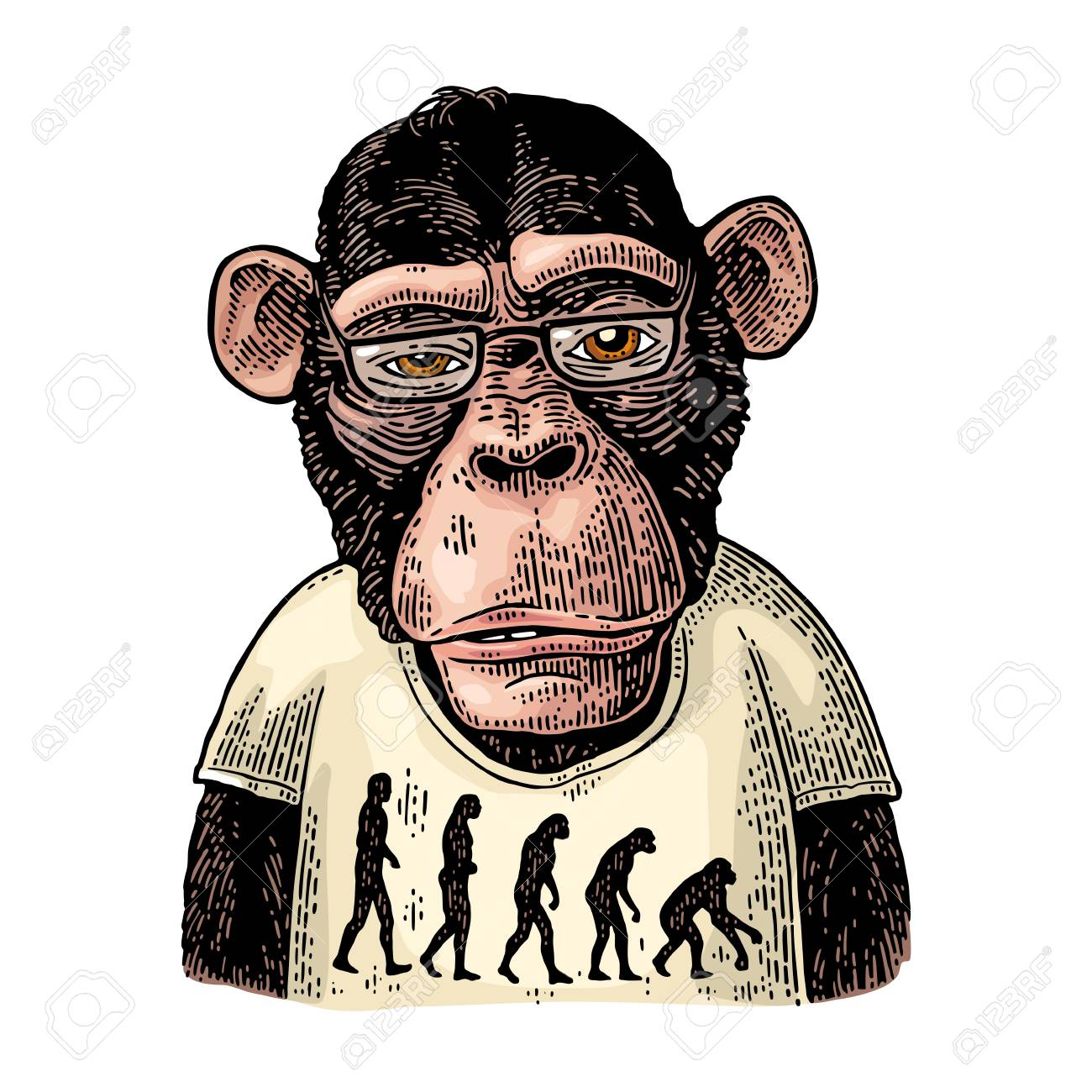 Monkeys dressed in a T-shirt with the theory of evolution on the contrary. - 112627925