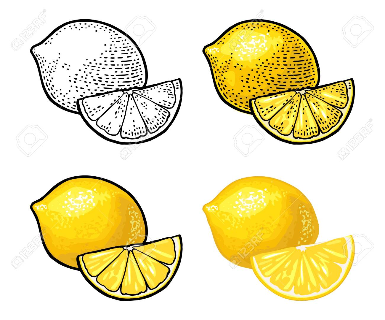 Lemon Slice and and whole. Isolated on white background. Vector black and color vintage engraving and flat illustration. Hand drawn design element for label and poster - 122489161