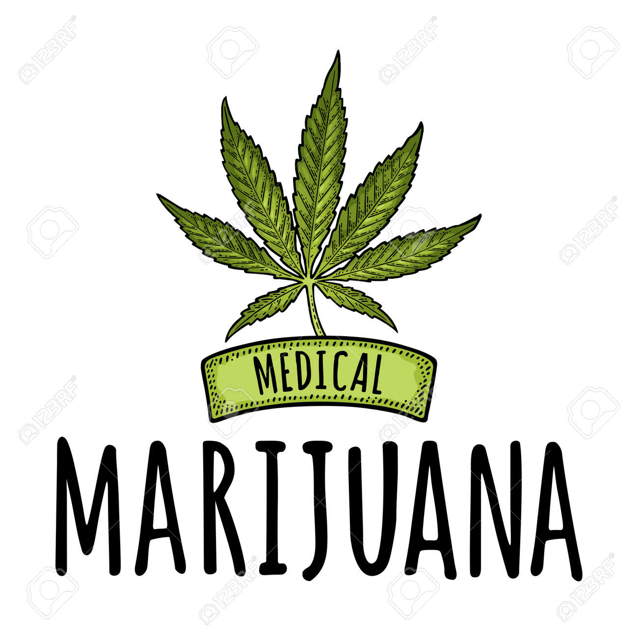 Cannabis leaf isolated on white background. Vintage color vector engraving illustration for label, poster, web. Medical marijuana handwriting lettering. - 149691624