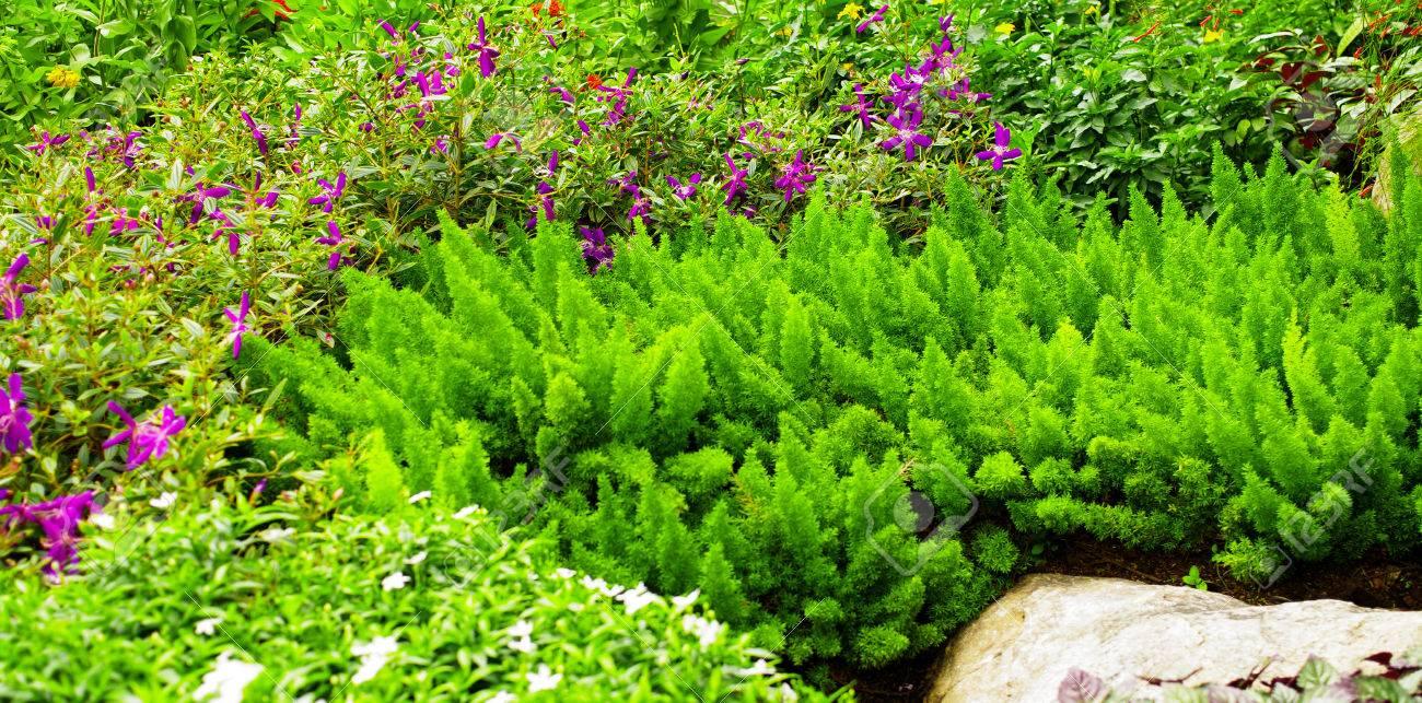 Schöne Pflanzen Hintergrund Im Garten Lizenzfreie Fotos Bilder Und