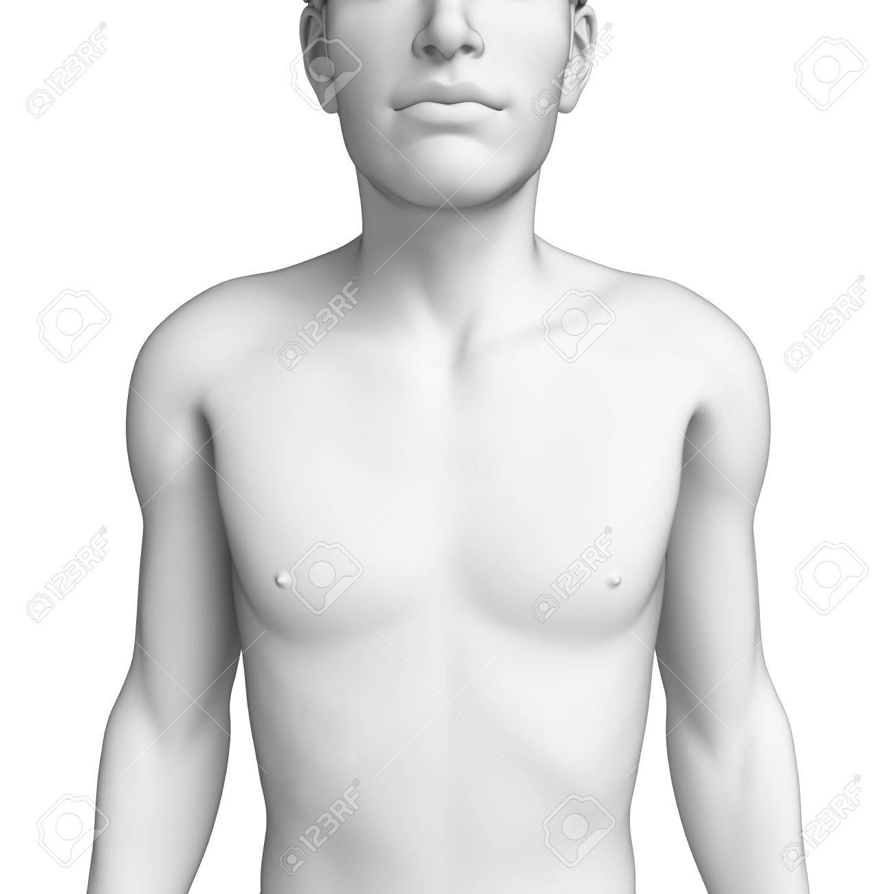 Illustration Of Male Chest Anatomy Artwork Stock Photo Picture And