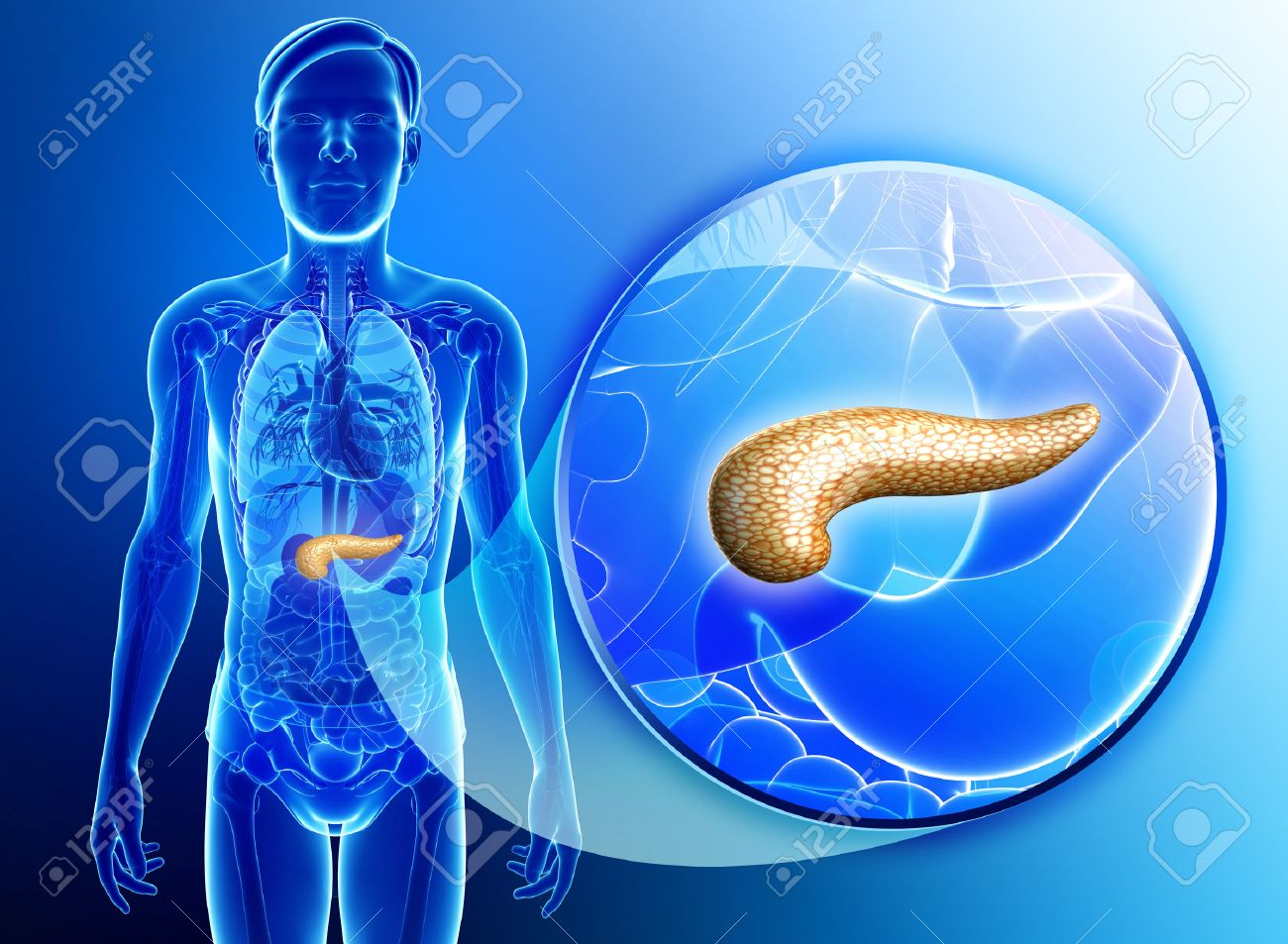 Illustration Of Male Pancreas Anatomy Stock Photo Picture And