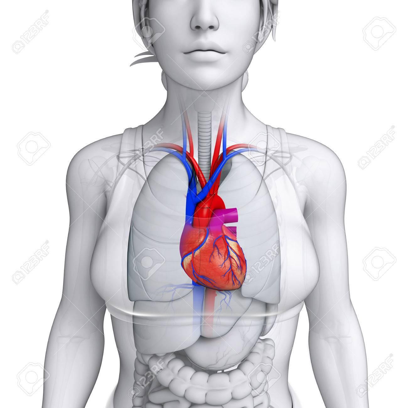 Único Implantes Cigomáticos El Enfoque Anatomía Guiada Friso ...