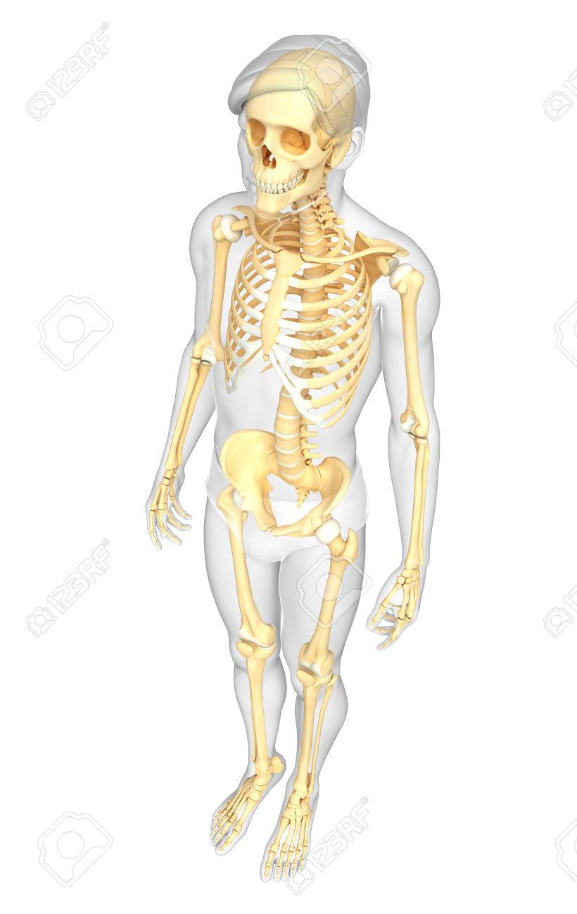 Illustration Of Human Skeleton Side View Stock Photo Picture And