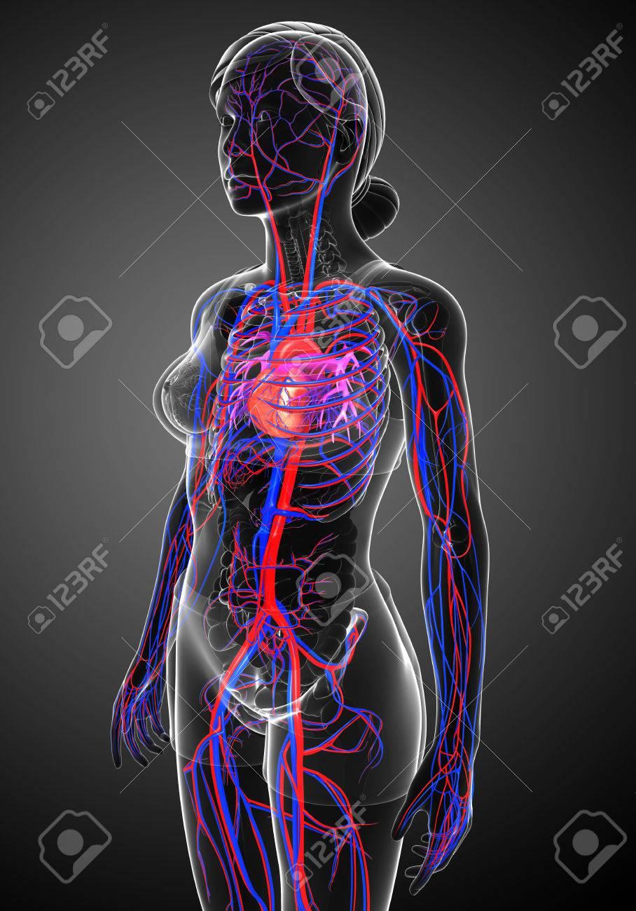 Ziemlich Bild Von Kreislaufsystem Fotos - Anatomie Von Menschlichen ...