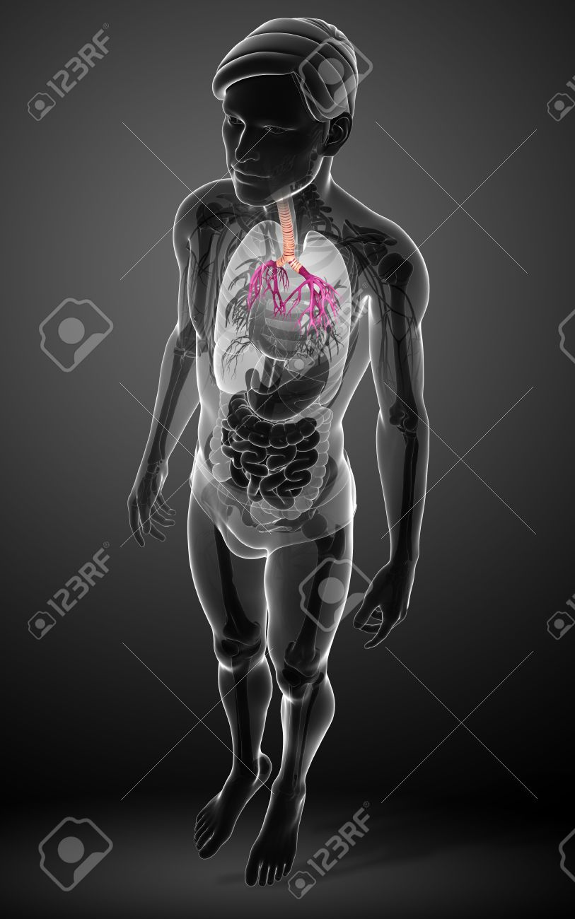 Illustration Of Male Throat Anatomy Stock Photo Picture And Royalty