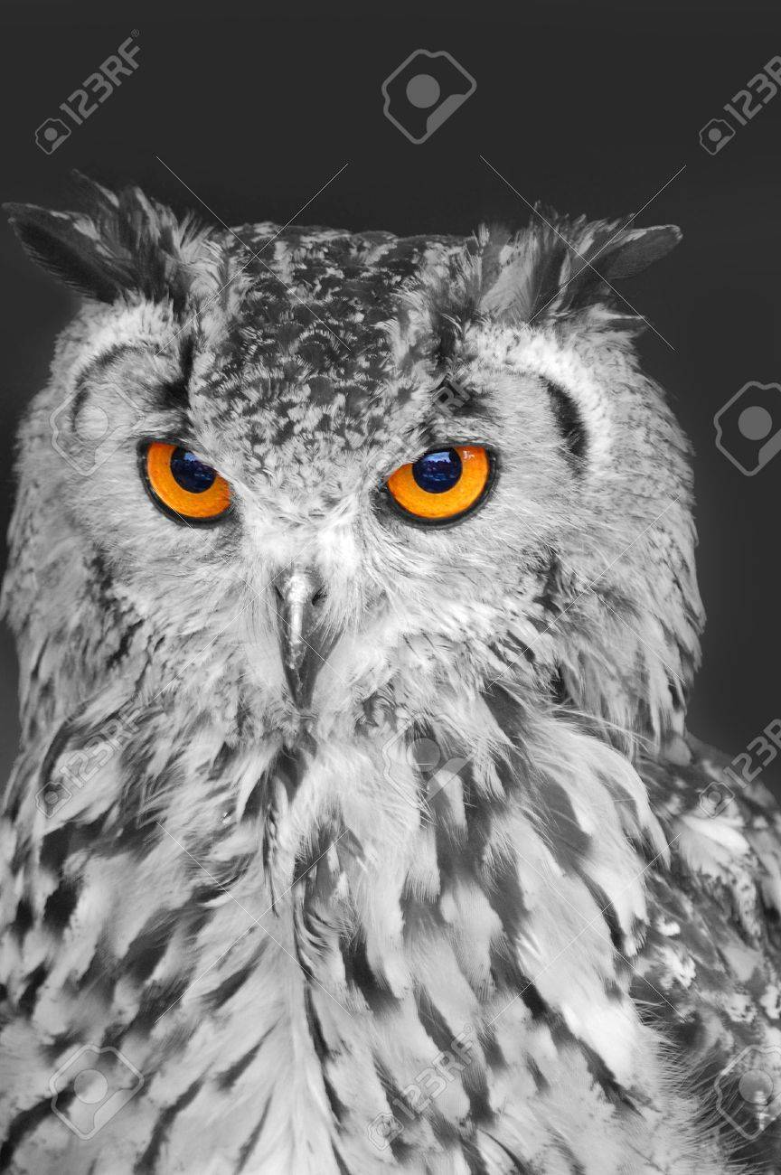 Eagle owl in black and white with bright orange eyes stock photo 8834518