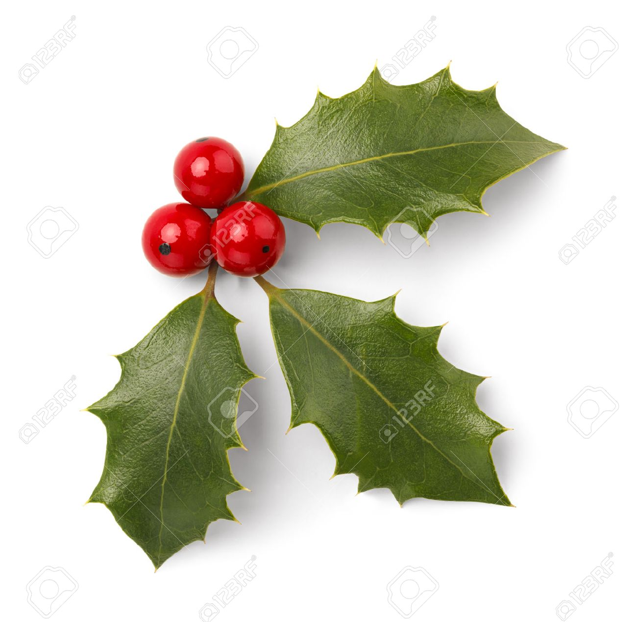 Christmas Ornaments: Holly Leaves And Red Berries Isolated On White  Background