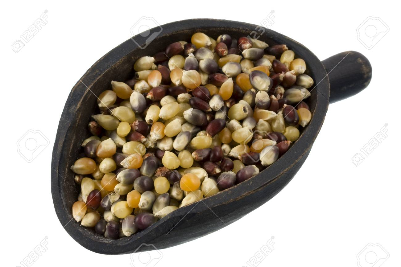 multicolor kernels of indian corn on a rustic, wooden scoop, isolated on white Stock Photo - 4067751